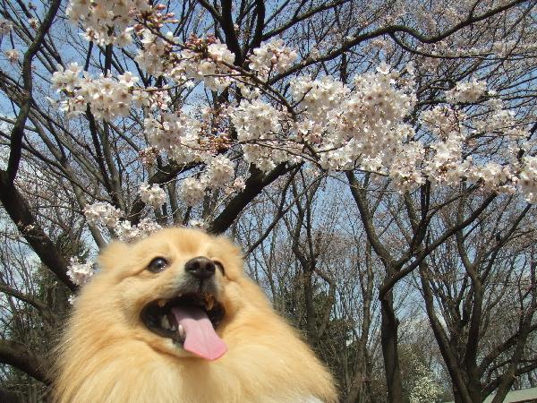 桜と一緒に♪