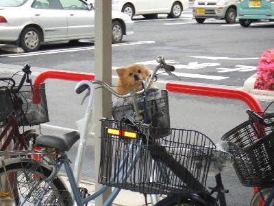 自転車置き場の中でまつわ~