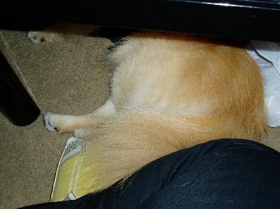 テーブルの下で