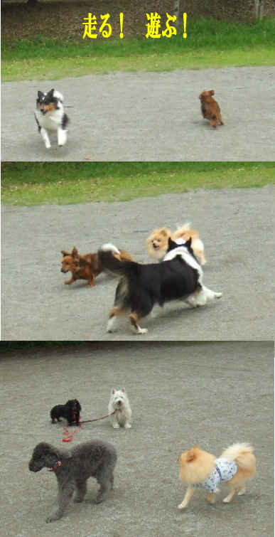 走る・遊ぶ♪