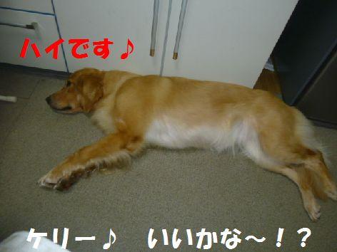 a_20110731084600.jpg