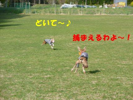 d_20110430091502.jpg