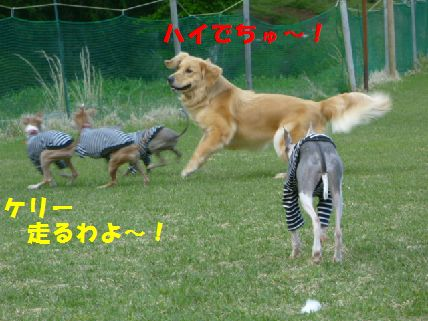 e_20110430091501.jpg