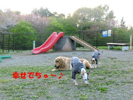 k_20110430091533.jpg