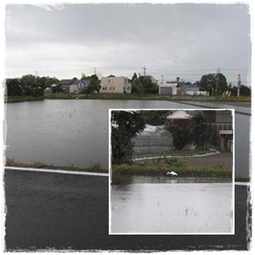 20110429a.jpg