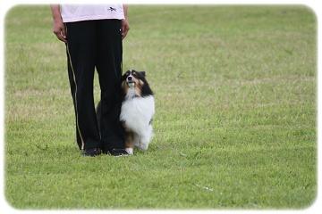 脚足停座の瞬間