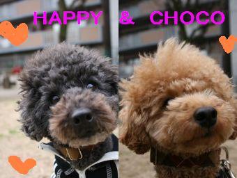 happychoco