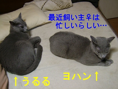 2007062902