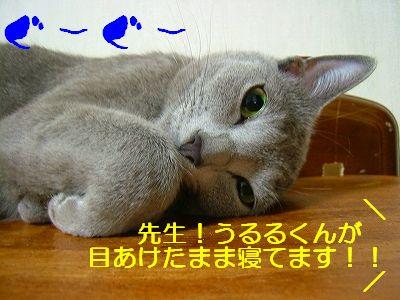 2007071304