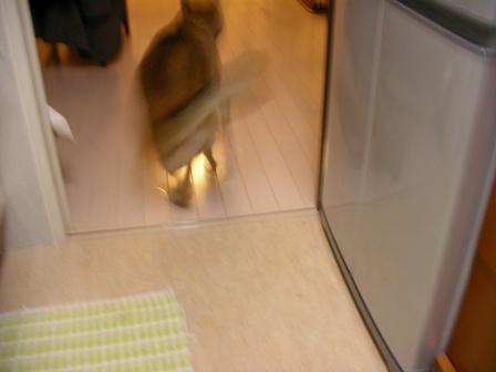 20070321_3.jpg
