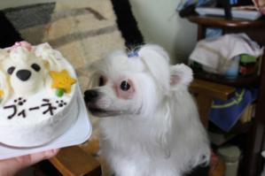 フィーネ_3_Birthday_3