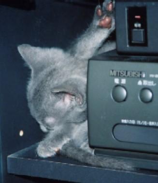 ルシアン子猫1