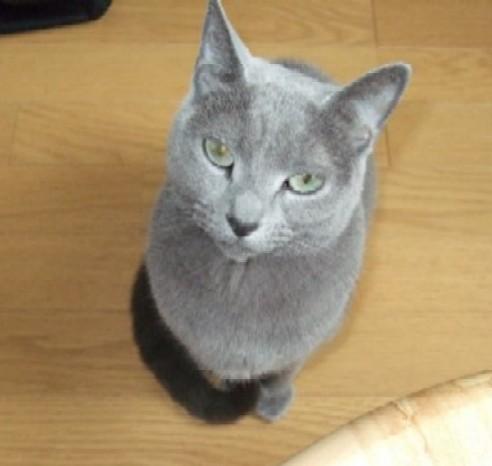 猫 だらけ ブログ
