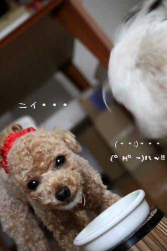 IMG_0440-1.jpg