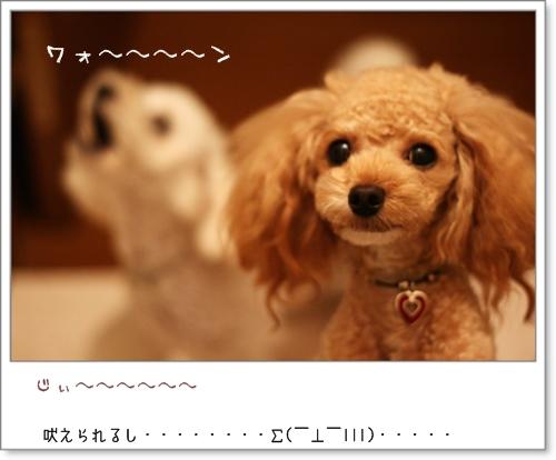 IMG_09195.jpg