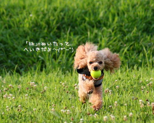 IMG_7251.jpg