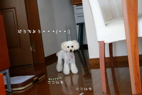IMG_9707.jpg