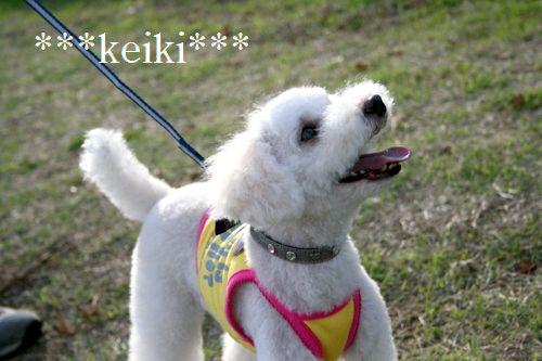 IMG_keiki.jpg