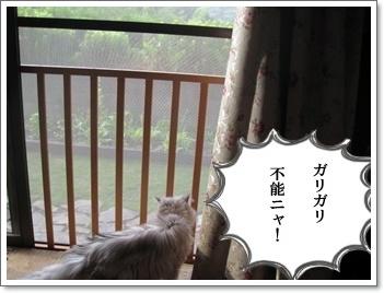 網戸と猫1