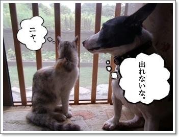 網戸と猫4