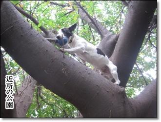 木登りだ!