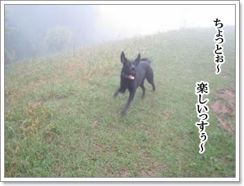 霧中に夢中1