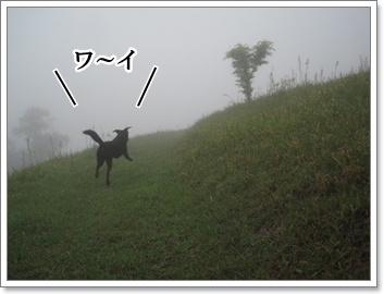 霧中に夢中2
