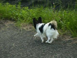 アトム走る!