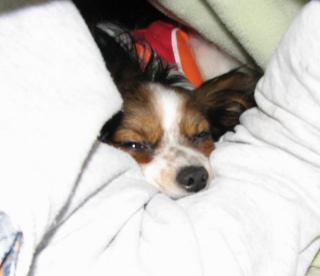 熟睡中のアトム