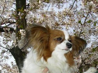 桜とサクラ