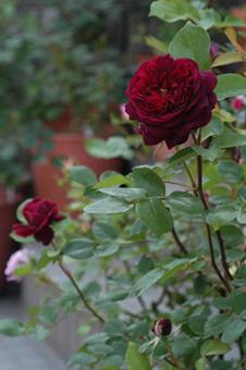 blackberrynip2010508-3a.jpg