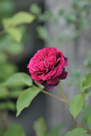 blackberrynip2011514.jpg