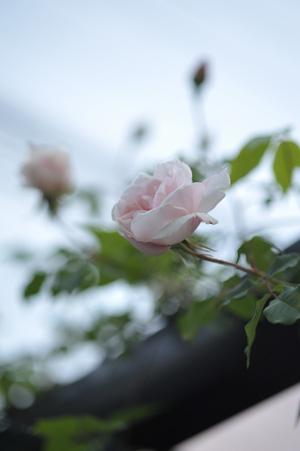 carriere2011508-5.jpg