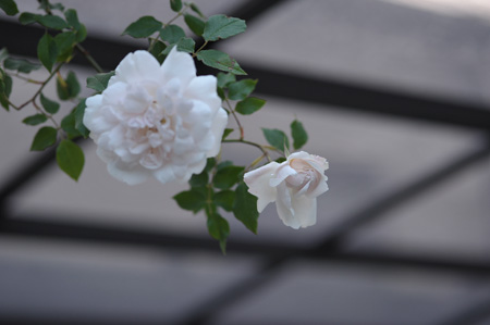 carriere2011509-2.jpg