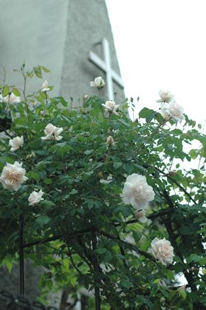 carriere2011510-1.jpg