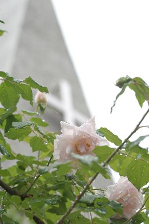 carriere2011512-1.jpg