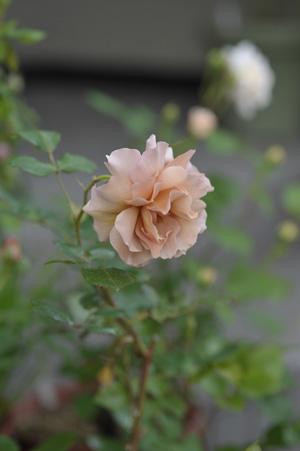 julia2011514-1.jpg