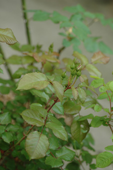 lavaglut2011511.jpg