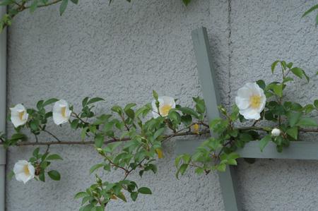 naniwa2011506-1.jpg