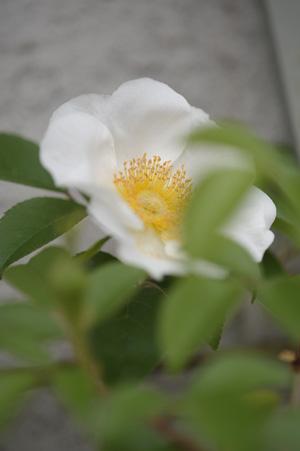 naniwa2011506-2.jpg