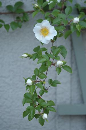 naniwa2011509-1.jpg