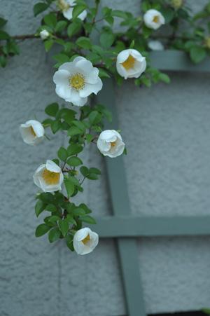 naniwa2011510.jpg