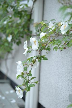 naniwa2011511-2.jpg
