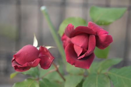 okurahoma2011513-2.jpg