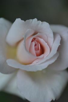 ophelia2011511-5.jpg