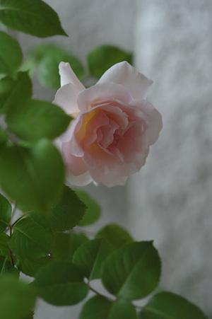 ophelia2011512-1.jpg