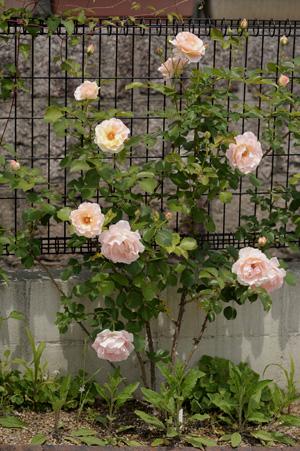 rococo2011516-1.jpg