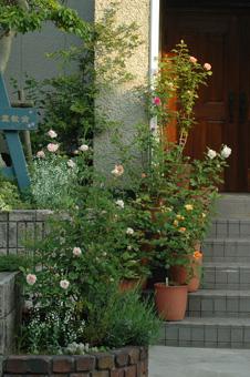 roses2011517-1.jpg