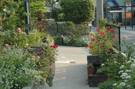 roses2011517-4.jpg