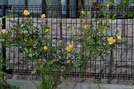 sahara98_2011513-1.jpg
